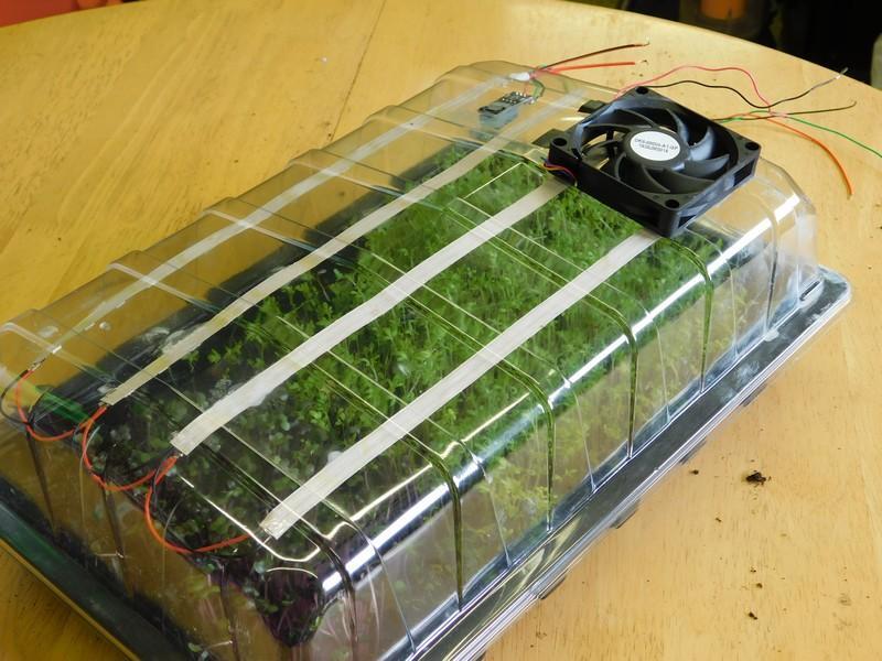 mini-greenhouse_1.jpg